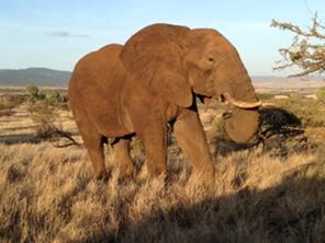 Galvan_KenyanConservancies_Elephant_07.16.14