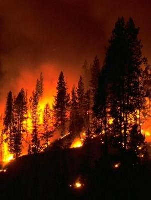 wildfire2