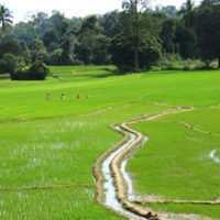 Small-scale irrigation in the Uda Walawe river basin, Sri Lanka.