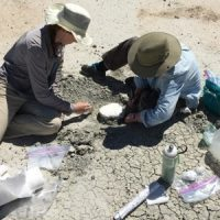 A plaster jacket is being placed around the Palaeosinopa fossil by Rachel Bockrath and Kimberly Nichols.