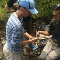 S. Kent and A. Albergoni tagging an endangered and endemic 'Swamper' Iguana.  [Photo credit – Keri Brondo]