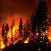wildfire_280x280