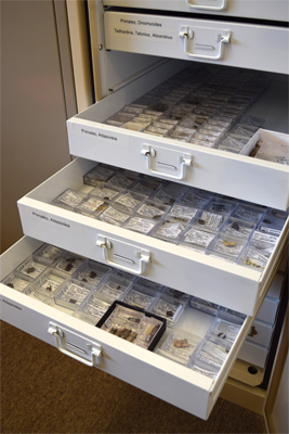 Storage trays of primate fossil specimens