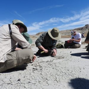 Students digging with tools in dry creekbed