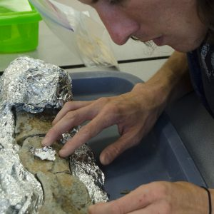 Ben Rodwell working in the Primate Origins Lab after the 2015 Paleontology Field School.