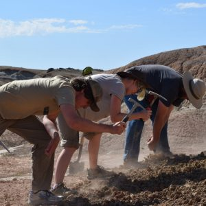Students loosening soil during the 2016 Paleontology Field School.
