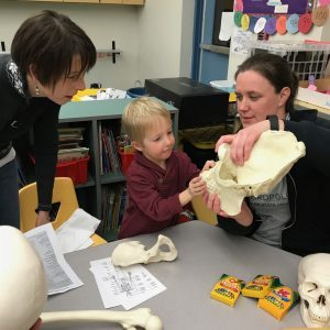 Woman shows young child a skull during Elementary School Science Night